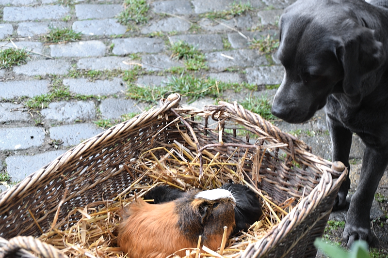 Labrador vom Elstertal unser Zuhause 5