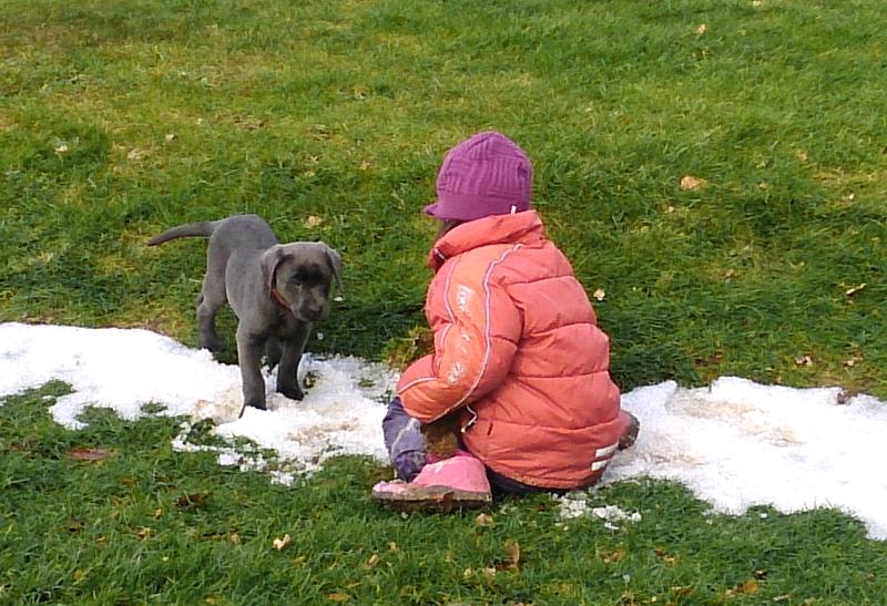 Labrador Welpe Elli 6