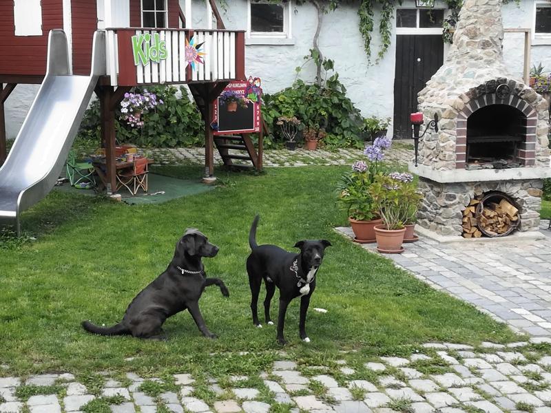 Labrador vom Elstertal unser Zuhause